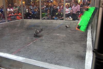 Action shot of robots combatting